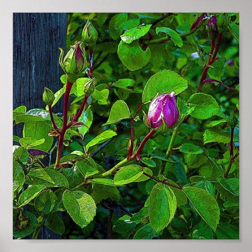 Rosebuds Poster