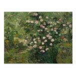 Rosebush in Blossom, Vincent van Gogh