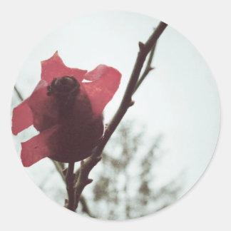 Rosehip_(c)sybillsterk.jpg Round Sticker