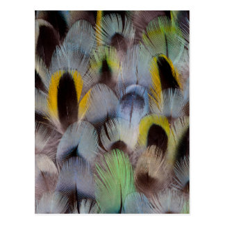 Rosella Feather Design Postcard