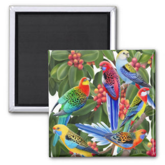 Rosella Parrots in Fig Tree Magnet