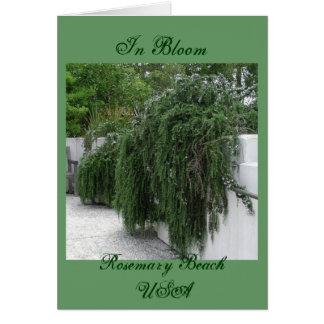 Rosemary Beach, Rosemary Card