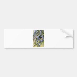 Rosemary blossom in spring macro bumper sticker