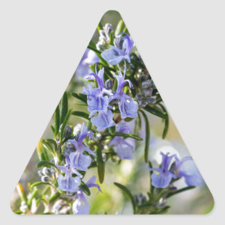 Rosemary blossom in spring macro triangle sticker