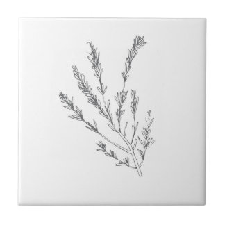 Rosemary Herb small tile