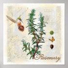 Rosemary, herbs Hummingbird Botanical Art Print