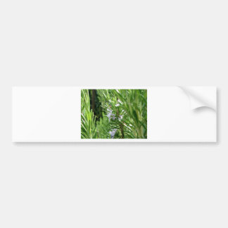 Rosemary plant with flowers bumper sticker