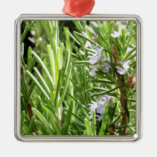 Rosemary plant with flowers Silver-Colored square decoration
