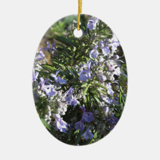 Rosemary plant with flowers in Tuscany, Italy Christmas Ornament