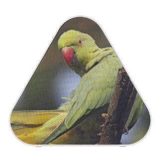 Roseringed Parakeet,Keoladeo National Park,