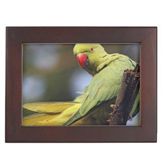 Roseringed Parakeet,Keoladeo National Park, Keepsake Box