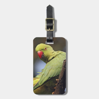 Roseringed Parakeet,Keoladeo National Park, Luggage Tag