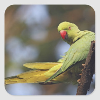 Roseringed Parakeet,Keoladeo National Park, Square Sticker