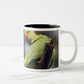 Roseringed Parakeet,Keoladeo National Park, Two-Tone Coffee Mug