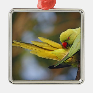 Roseringed Parakeet preening,Keoladeo National Christmas Ornament