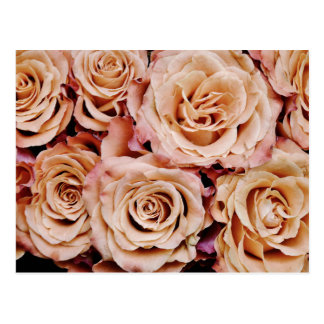 roses-366170 dusty light coral pink natural petals post cards