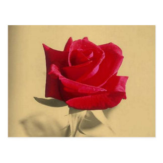 Roses Are Red Post Card