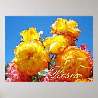 Roses art prints Yellow Orange Rose Flowers Print