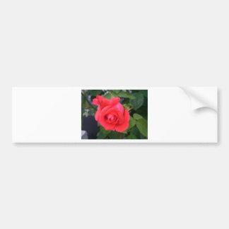Roses Bumper Sticker