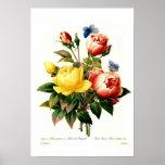 Roses by Pierre-Joseph Redouté Print