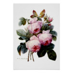 Roses by Redoute Posters