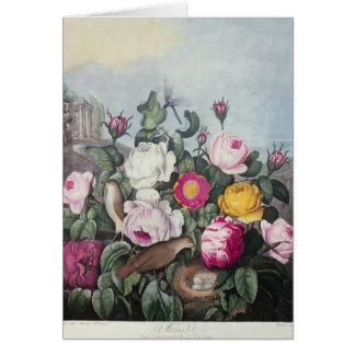 Roses, from 'The Temple of Flora' Card