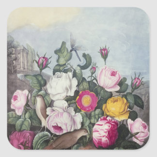 Roses, from 'The Temple of Flora' Square Sticker