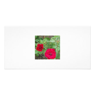 Rose's Garden 1 Customized Photo Card
