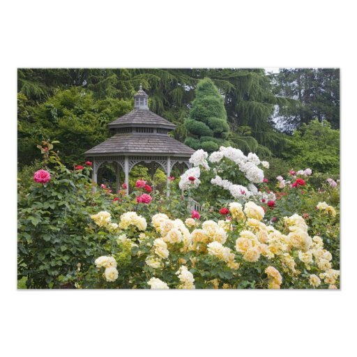 Roses in bloom and Gazebo Rose Garden at the Photo Art