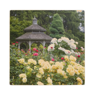 Roses in bloom and Gazebo Rose Garden at the Wood Coaster
