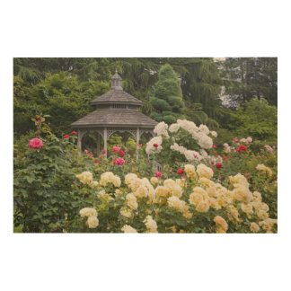 Roses in bloom and Gazebo Rose Garden at the Wood Wall Art