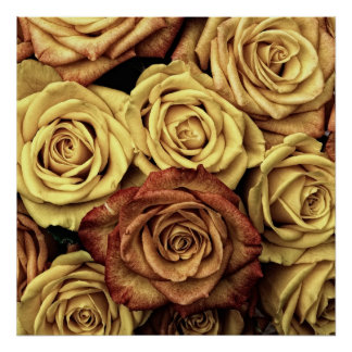 Roses in Sepia Tone Poster