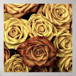 Roses in Sepia Tone Poster