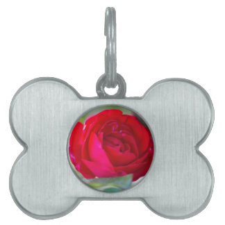 roses in the garden pet ID tag