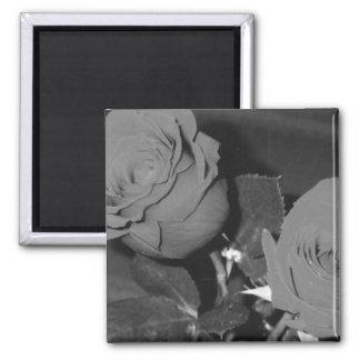 Roses Magent Square Magnet