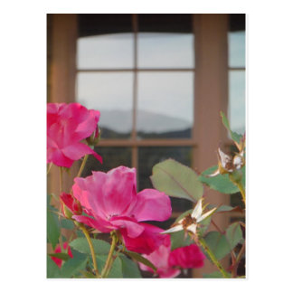 Roses & Mt. reflection in Clubhouse windows Postcard