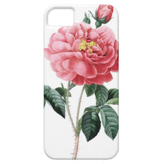 Roses of Redoute Les Roses vintage image Barely There iPhone 5 Case