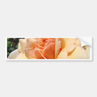 ROSES Peach Rose Flowers Cards Gifts Mugs Car Bumper Sticker