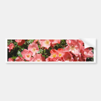 ROSES Pink White Rose Flowers 7 Cards Gifts Mugs Bumper Sticker