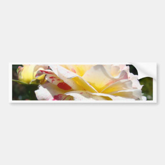 ROSES Pink Yellow Rose Flowers 3 Cards Gifts Mugs Bumper Sticker