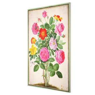 Roses, plate 4 from the Nassau Florilegium (w/c on Canvas Print