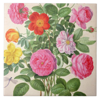 Roses, plate 4 from the Nassau Florilegium (w/c on Tile