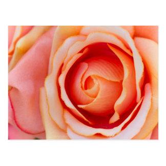 roses postcards