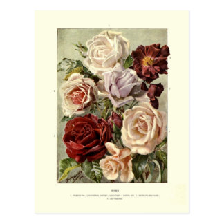 Roses Postcards