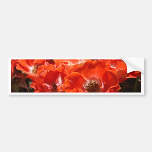 ROSES Red Rose Flowers 1 Cards Gifts Mugs Bumper Stickers