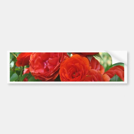 ROSES Red Rose Flowers 2 Cards Gifts Mugs Bumper Stickers