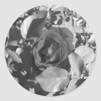 Roses Stickers