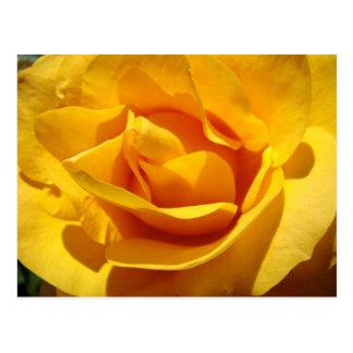 ROSES Yellow Orange Rose Flowers 1 Cards Gifts Mug Postcard