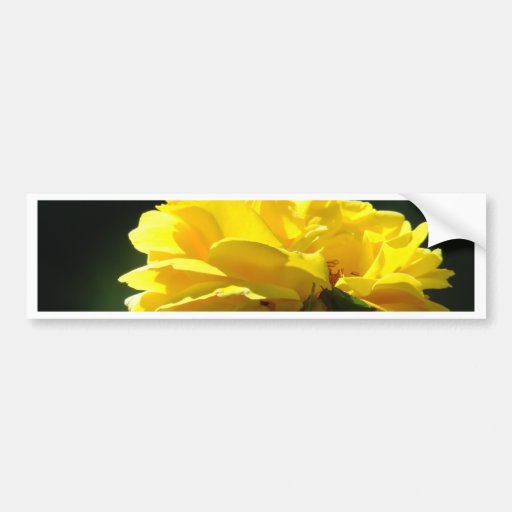 ROSES Yellow Rose Flowers 2 Cards Gifts Mugs Bumper Sticker