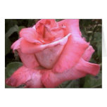 Rosey Pink Greeting Cards